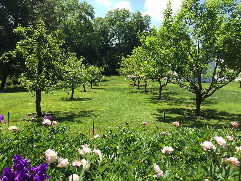 Hmwhite Orchard Garden
